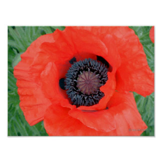 Electric Poppy Poster