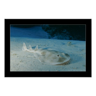Electric Ray Poster
