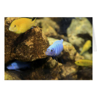 Electric Yellow & Blue Ciclid Tropical Reef Fish C Card