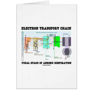 Electron Transport Chain Final Stage Of Aerobic Greeting Card