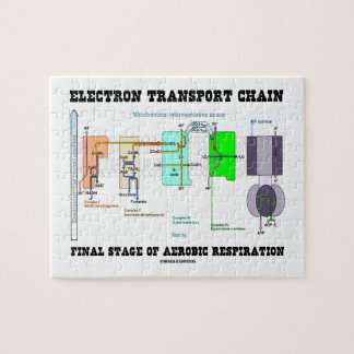 Electron Transport Chain Final Stage Of Aerobic Jigsaw Puzzle