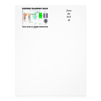 Electron Transport Chain Final Stage Of Aerobic Letterhead