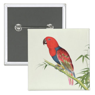 Electus Parrot, on a bamboo shoot Pinback Button