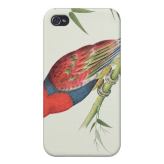 Electus Parrot, on a bamboo shoot Cover For iPhone 4