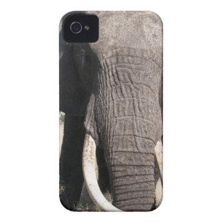 Elefante (africana) del Loxodonta, campo 3 de Abu Case-Mate iPhone 4 Carcasas