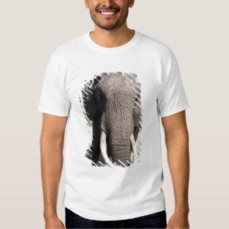 Elefante (africana) del Loxodonta, campo 3 de Abu Poleras