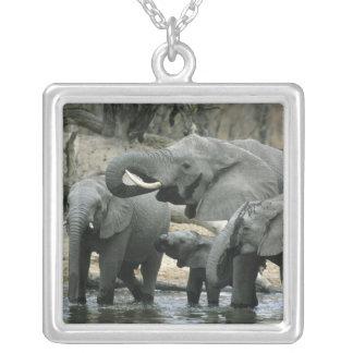 Elefante africano, (africana del Loxodonta), bebie Pendiente Personalizado