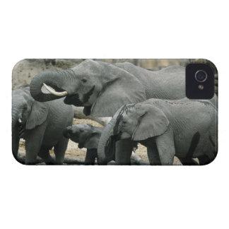 Elefante africano, (africana del Loxodonta), bebie iPhone 4 Case-Mate Cárcasa