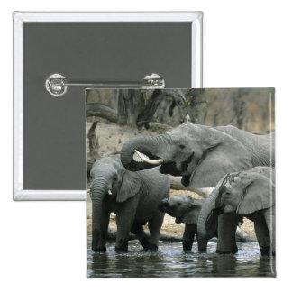 Elefante africano, (africana del Loxodonta), bebie Pin Cuadrada 5 Cm