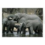 Elefante africano, (africana del Loxodonta), bebie Tarjeta De Felicitación