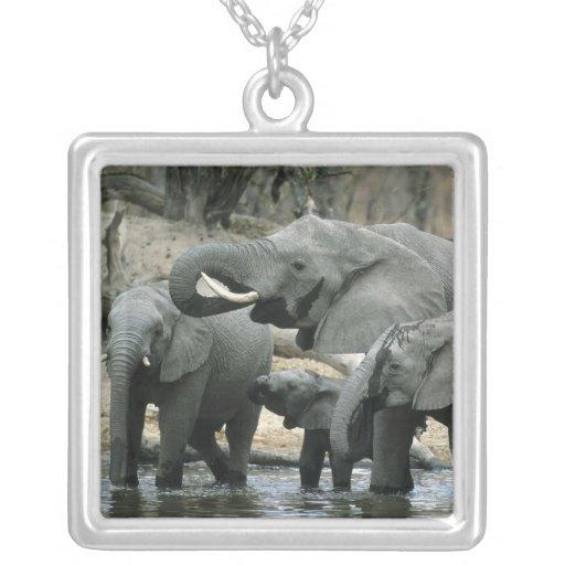 Elefante africano, (africana del Loxodonta), Colgante Cuadrado