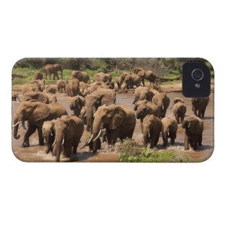 Elefante africano, africana del Loxodonta, cruzand Case-Mate iPhone 4 Cárcasa
