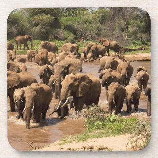 Elefante africano, africana del Loxodonta, cruzand Posavaso