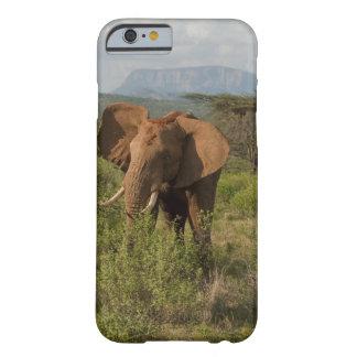 Elefante africano, africana del Loxodonta, en Funda Barely There iPhone 6