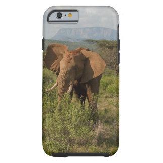Elefante africano, africana del Loxodonta, en Funda Resistente iPhone 6