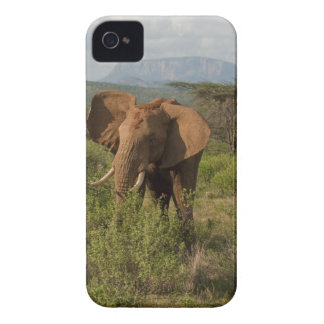 Elefante africano, africana del Loxodonta, en Samb iPhone 4 Case-Mate Cárcasa