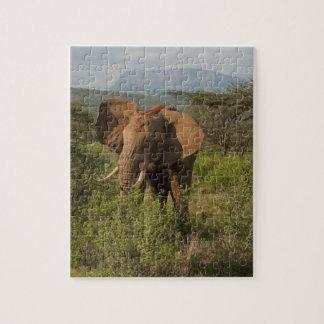 Elefante africano, africana del Loxodonta, en Samb Rompecabeza