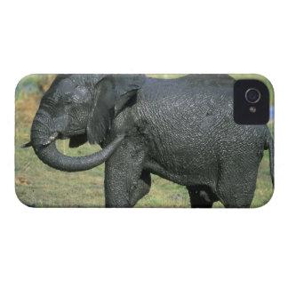 Elefante africano, (africana del Loxodonta), fango Case-Mate iPhone 4 Coberturas
