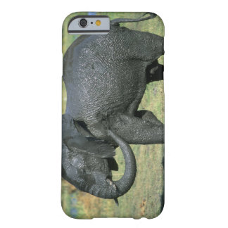 Elefante africano, (africana del Loxodonta), fango Funda De iPhone 6 Barely There