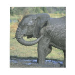 Elefante africano, (africana del Loxodonta), fango Libretas Para Notas