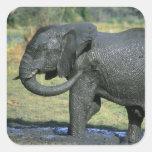 Elefante africano, (africana del Loxodonta), fango Calcomanía Cuadradas Personalizadas