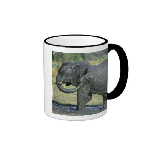 Elefante africano, (africana del Loxodonta), fango Taza