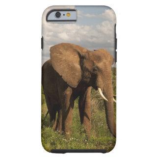 Elefante africano africana del Loxodonta hacia