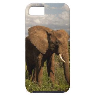 Elefante africano, africana del Loxodonta, hacia f iPhone 5 Case-Mate Cárcasa