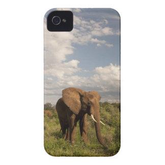 Elefante africano, africana del Loxodonta, hacia f iPhone 4 Carcasas
