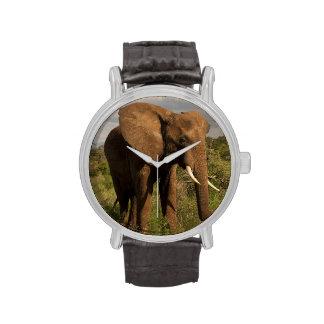 Elefante africano, africana del Loxodonta, hacia f Relojes De Mano