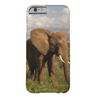 Elefante africano, africana del Loxodonta, hacia Funda De iPhone 6 Barely There