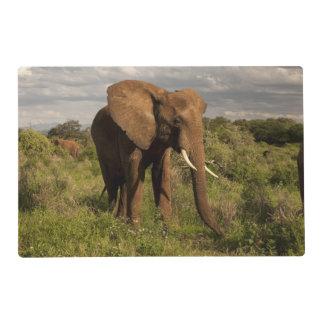 Elefante africano, africana del Loxodonta, hacia Salvamanteles
