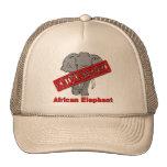 Elefante africano animal en peligro gorras