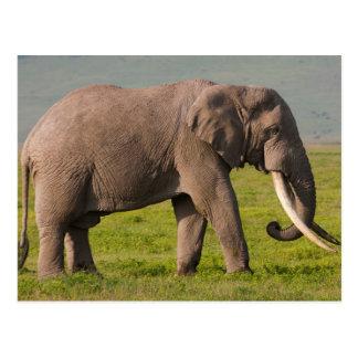 Elefante africano, área de la protección de tarjetas postales