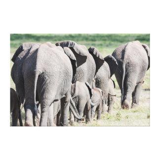 Elefante africano de Bush (Loxodonta Africana) 4 Impresión En Lienzo