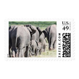 Elefante africano de Bush (Loxodonta Africana) 4 Timbres Postales