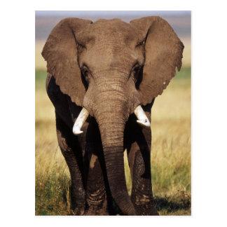 Elefante africano de Bush Postales
