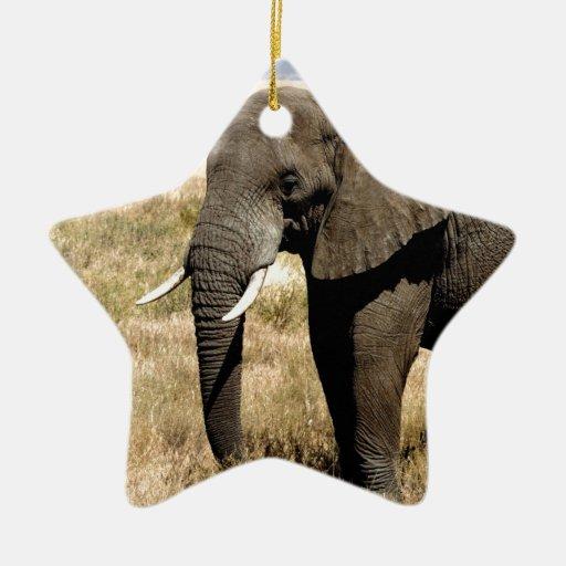 Elefante africano de Bush que se mueve al éxito Adorno De Cerámica En Forma De Estrella