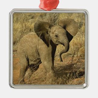 Elefante africano del bebé, Loxodonta Africana, Adorno Para Reyes