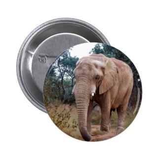 Elefante africano en el arbusto pin
