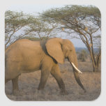 Elefante africano en Samburu NP, Kenia Calcomania Cuadradas Personalizadas
