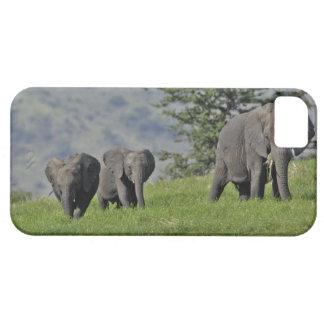 Elefante africano femenino con el bebé, Loxodonta iPhone 5 Carcasas