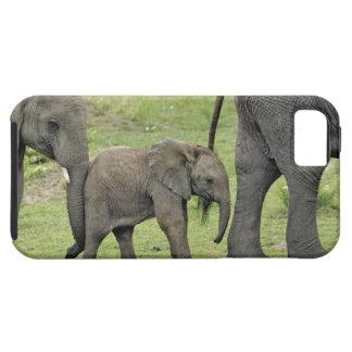 Elefante africano femenino con el bebé, Loxodonta  iPhone 5 Case-Mate Carcasas