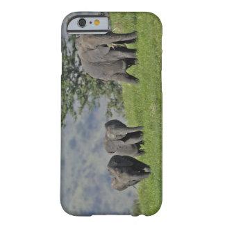 Elefante africano femenino con el bebé, Loxodonta Funda De iPhone 6 Barely There