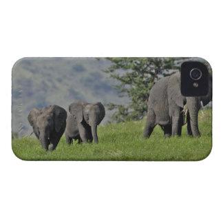 Elefante africano femenino con el bebé, Loxodonta  iPhone 4 Case-Mate Carcasa