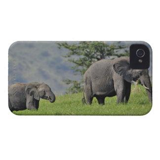 Elefante africano femenino con el bebé, Loxodonta iPhone 4 Case-Mate Funda