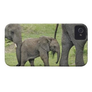 Elefante africano femenino con el bebé, Loxodonta  Case-Mate iPhone 4 Cobertura