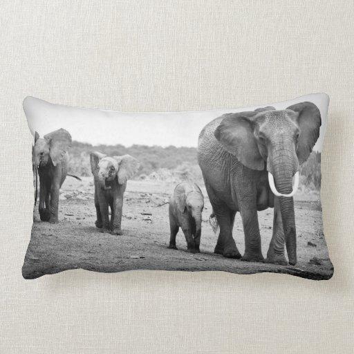 Elefante africano femenino y tres becerros, Kenia Cojines