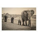 Elefante africano femenino y tres becerros, Kenia Impresiones En Madera