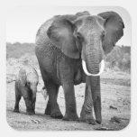 Elefante africano femenino y tres becerros, Kenia Pegatinas Cuadradas Personalizadas